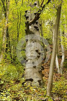 Tree in forest covered with polypores fungus.