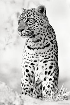 Best Black and White Photography | picz4pin