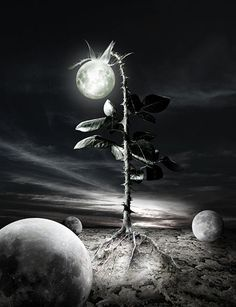 Bizarre Surreal and Dark Art Pictures   Under the Last Moon
