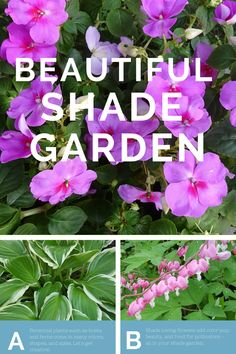If you are a beginner you may be feeling overwhelmed and worried about investing time and energy into this project only to have limited success or redo it at a later date. Don't worry, we are going to start with very easy, hard to kill plants, Plants that if you decided they are not quite in the right place, can easily be moved. #shade #gardening #beginnergrdening #shadelovingplants #hosta