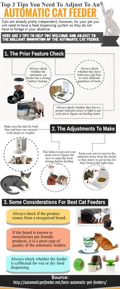 You also need to make sure that the automatic cat feeder is made of stainless steel. This is useful as these can be easily cleaned rather than the ones made of plastic or ceramic. These are also sturdier than the other two making it the best choice for cat owners. For more information about Automatic Cat Feeder, please visit http://automaticpetfeeder.net/best-automatic-pet-feeders/