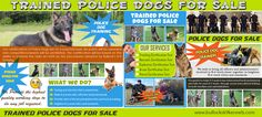 Click this site http://storify.com/policek9forsale for more information on Trained Police Dogs For Sale. Police dogs are armed law enforcement agents. They do not lug weapons, yet they do lug teeth - sharp teeth that they could make use of to kill an individual within secs. Police dogs are highly trained functioning dogs. They have tasks, and they take their tasks quite, very seriously. You can aim to purchase trained police dogs for sale at the very best costs.