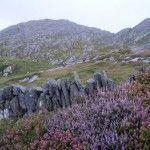 Typical Landscape Ireland