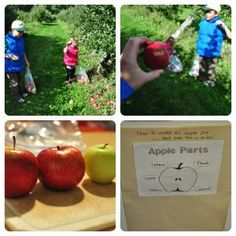 Our September Nature Studies - Insects and Apples - Serving From Home