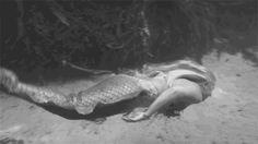 Little Mermaid Erg Mooie 07344
