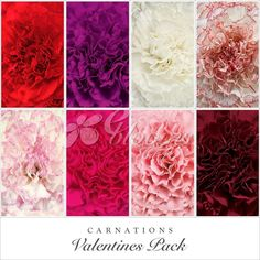 45 Ideas For Diy Wedding Bouquet Roses Valentines Day Roses Valentines Day, Valentine Gifts, Bulk Flowers Online, Fifty Flowers, Winter Bouquet, Diy Wedding Bouquet, Rose Gift, Flowers Delivered, Fall Flowers