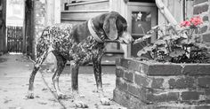 A Powerful Story For Anyone Who Has Ever Lost A Dog