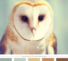 Color Inspiration Daily