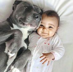 Pit bull and baby