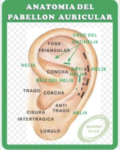 Anti Helix, Ear Reflexology, Acupuncture Points, Alternative Medicine, Body Works, Home Remedies, Reiki, Health Fitness, Projects