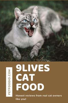9Lives Cat Food: Nine Lives Approved? - PetFoodio.com Healthy Cat Food, Corn Gluten Meal, Mother Feeding, Protein Plus, Healthy Body Weight, Nine Lives, Food Out, Feral Cats, Cat Lovers