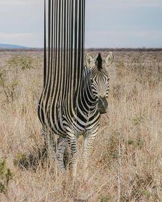 Hayvanları Yaptığı Rötuşlarla İlginç Hallere Sokan Sanatçıdan 20+ Çalışma Sanatlı Bi Blog 29