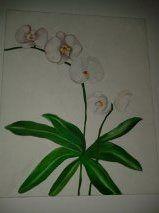 Orquideas al oleo  original painted by Cori https://www.facebook.com/CoriAsens/