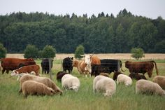 Haltialan tilalla pääsee ihmettelemään erilaisten kotieläinten elämää ympäri vuoden. #helsinki #finland