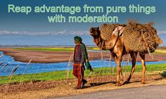 The Creator, His Caliph and Satan (Allaah, Aadamii awr ibliis): Reap advantage from pure things with moderation