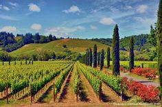 Ferrari-Carano Vineyards, Dry Creek Valley, Sonoma County, California by lhg_11, via Flickr