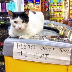 Bodega Cats Are Not so Secretly the Best Thing About New York