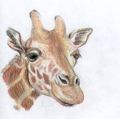 drawing color pencils - Google Search
