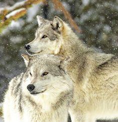 The Beauty of Wildlife — Best Friends by Bob Watson