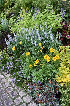 天野麻里絵さんの「やってみよう! 初めてのガーデニング」 小さな花壇で 長く楽しむ初夏からの花5選 - GardenStory (ガーデンストーリー)