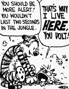 Calvin and Hobbes, DE'S CLASSIC PICK of the day (10-23-14) - You should be more alert! You wouldn't last two seconds in the jungle. ...THAT'S WHY I LIVE HERE, YOU DOLT!