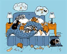 You know you are addicted to Shelties when…