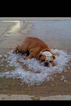 Keeping cool! This is about to be me... lol