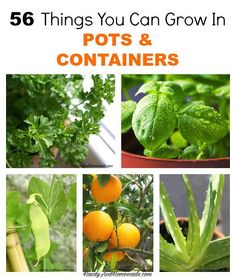 56 Things You Can Grow In Pots And Containers