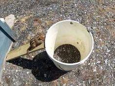 Simple Chipmunks Trap With Bucket Chipmunk Bait Homesteading Squirrels