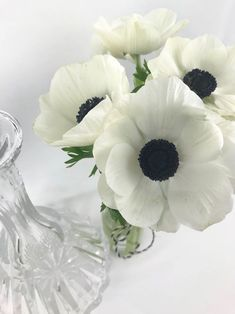 . Red Poppies, Yellow Flowers, Colorful Flowers, Spring Flowers, White Tulips, White Roses, Zinnias, Daffodils, Buddha Flower
