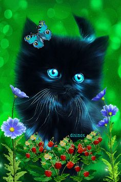 Let Us Adorable Kittens Entertain You! Black Kitten's New Friends Are Butterflies! Kitten Love, Kitten Gif, Cat Gif, Cute Baby Animals, Animals And Pets, Funny Animals, Beautiful Gif, Animals Beautiful, Cute Cats And Kittens
