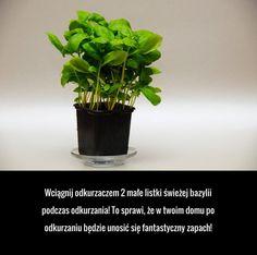 Asia, Web Design, Herbs, Cleaning, Tips, Ideas, Random Stuff, Design Web, Herb