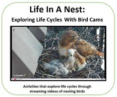 BirdCams Lesson: This is some teaching suggestions to go along with an elementary class inquiry unit on birds. The best part of this website is live camera feed on a few different birds in their nesting locations.