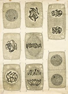 Above are artist Brett Kingery's stunning vintage illustrations of plant cell anatomy. How many structures are familiar to you?