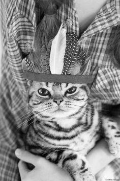 Chief kitty.