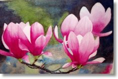 Magnolias - Horses - Watercolours - Paintings by Thelma Beechey Australian Artist