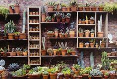 Faltou espaço? Use estantes para montar um lindo jardim - Casa e Decoração
