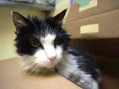 **MUST LEAVE TO VET BY 6PM TONIGHT!**Neurological** Sweet Beginner Long-Haired…