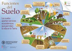 INFORMACIONES AGRONOMICAS: EL suelo, componentes, propiedades, Composicion