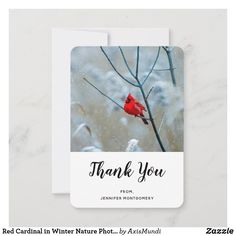 Red Cardinal in Winter Nature Photo Christmas Thank You Card