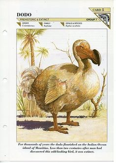 FFE5 - Extinct Animal - Dodo - Fact file Card