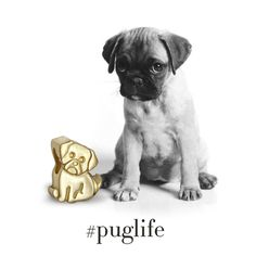 We're all about that #puglife with our new Little Animals Pug! Alex has captured the endearing nature of the adorable canine that has charmed pug-lovers all over the world. With Alex's signature hidden heart in his nose, we find it hard to resist his sweet face, don't you?  #alexwoo #littleicons #lovegold #pug #puppyeyes #wildforwoo