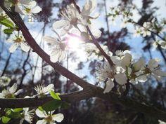 Waldbaumblüten. Canon Ixus.
