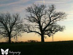 11 x 14 Canvas Print  Trees by BandBPhotographyNC on Etsy, $40.00