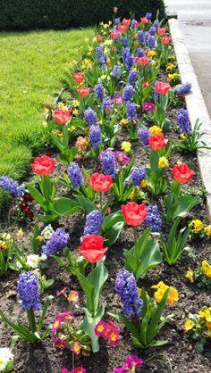 Front border Landscape Design, Garden Design, Small Flower Gardens, Garden Works, Fall Plants, Flowering Vines, Front Yard Landscaping, Water Garden, Dream Garden