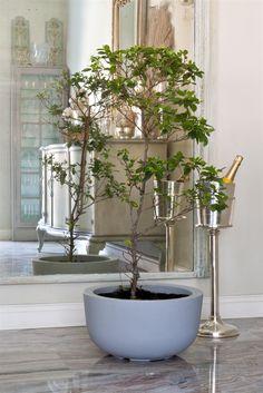 naoto fukasawa / cup planter for serralunga