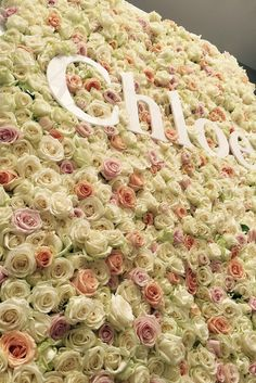 Stunning flower wall made of roses for Chloe press day.