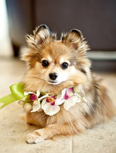Matching flowers for our dogs! -cute idea for an outdoor wedding, or just for pictures