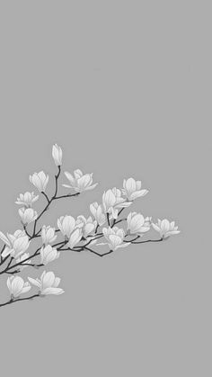 Flowery Wallpaper, Flower Background Wallpaper, Scenery Wallpaper, Pastel Wallpaper, Dark Wallpaper, Flower Backgrounds, Nature Wallpaper, White Flower Background, Phone Wallpaper Images