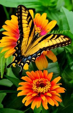 YELLOW BUTTERFLY & FLOWERS